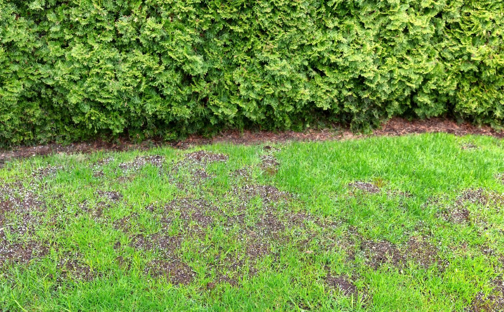 over seeding