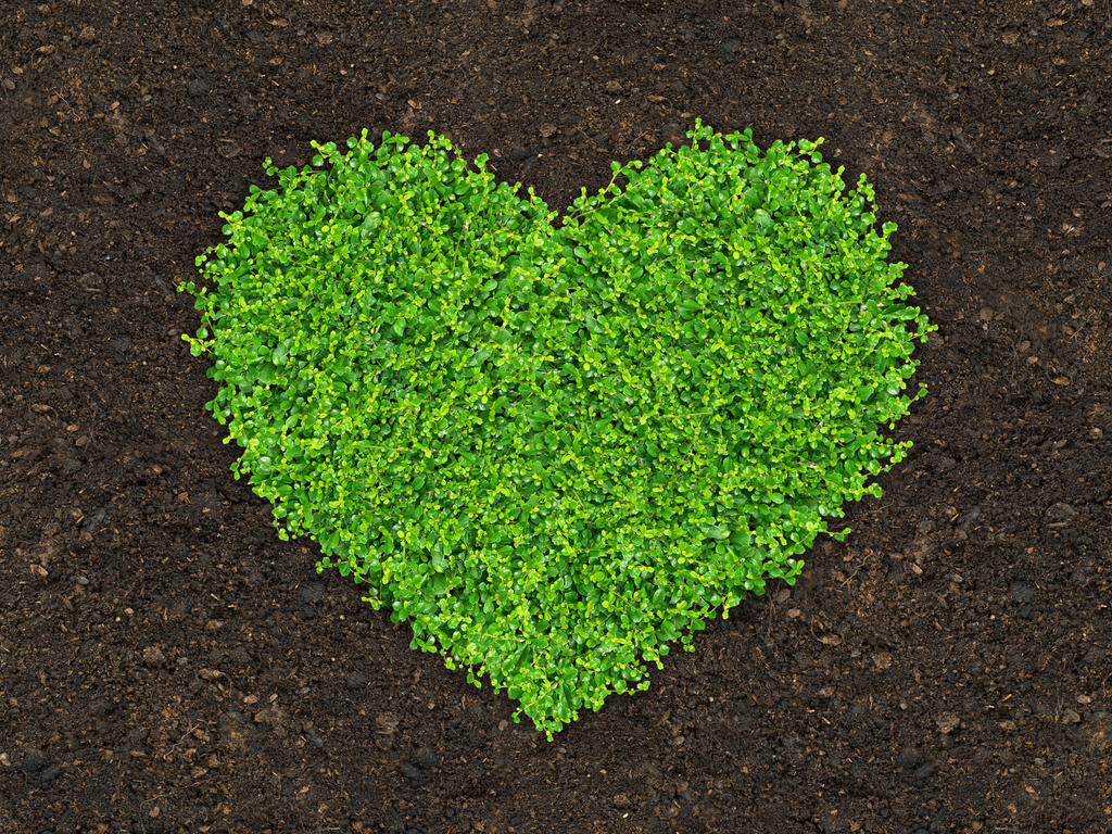 heart made out of grass